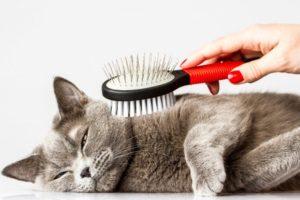 cat_comb